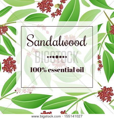 Sandalwood 100 percent essential oil. Square semitransparent banner with herbal elements at background.