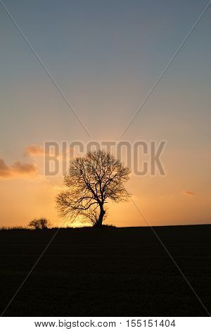 Lonely tree in the sunset at autumn