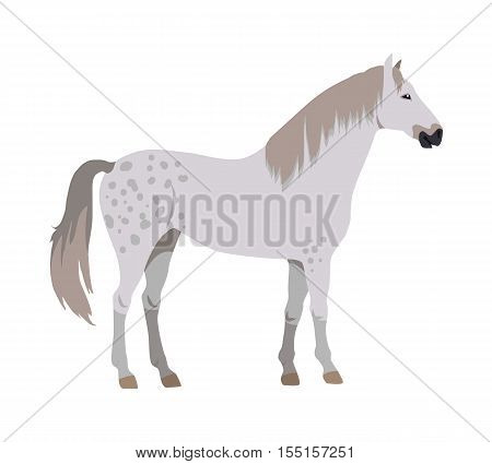 Gray with spots horse vector. Flat design. Domestic animal. Country inhabitants concept. For farming, animal husbandry, horse sport illustrating. Agricultural species. Isolated on white