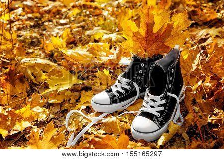Pair of sneakers on fallen leaves in autumn park