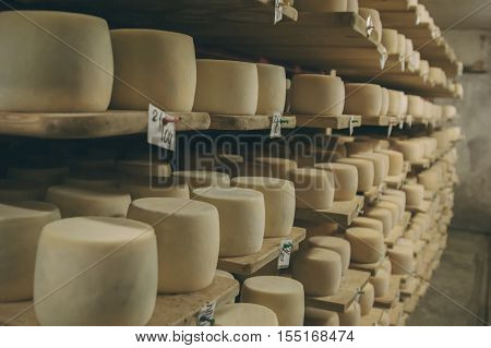Cheese production. Hard cheeses. Cheese heads on wooden shelves