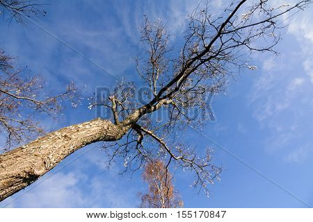 Leaning Treeon Sky Background In City Park