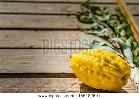 Four species: etrog lulav hadas and aravah symbols for Jewish holiday Sukkot