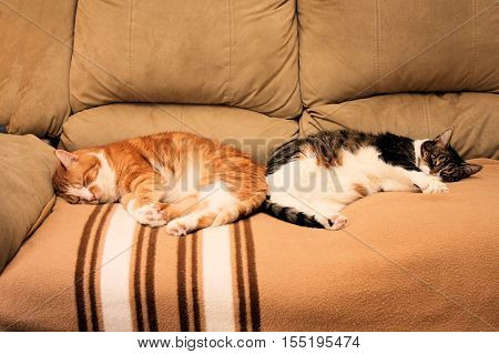 Two older cats lounging together on a comfy sofa.