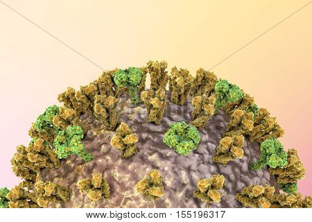 Influenza virus on colorful background showing surface glycoprotein spikes hemagglutinin and neuraminidase. 3D illustration