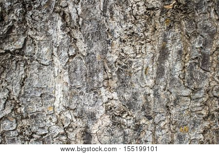 Wood texture closeup image. Macro photo of a tree surface. Natural background from forest for wooden banner template, shabby chick backdrop, ecology product package. Timber skin close-up picture