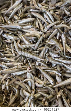Freshly caught mediterranean sand smelt fishes or Atherina boyeri from silverside family in the box on the counter at the fish shop. Mediterranean sand smelt fishes background. Vertical. Top view.