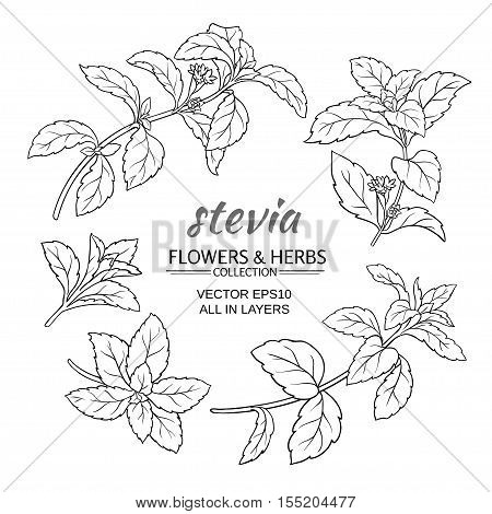 stevia herb vector set on white background