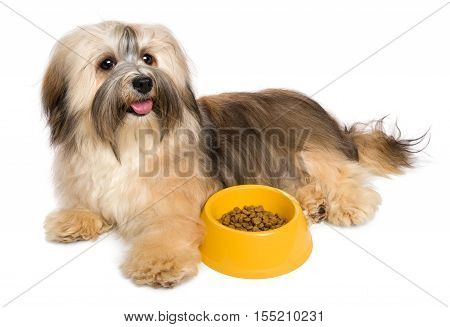 Happy Bichon Havanese puppy dog is lying next to her favorite dry food - isolated on white background