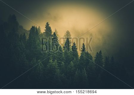 Foggy Colorado Forest Landscape. Colorado Hills in Clouds