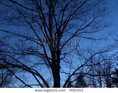 Tree Silhouette Against Night Sky