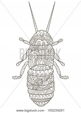 Beetle Coloring pet adult vector illustration. Anti-stress coloring for adults cockroach. Zentangle style. Black and white insect