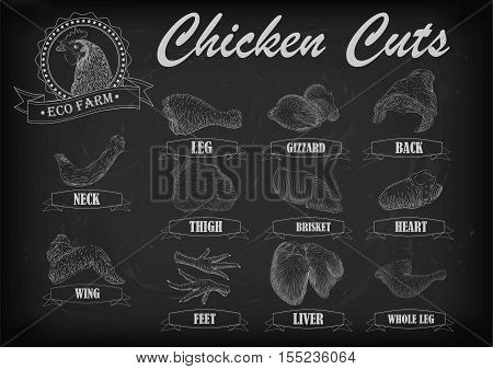 Chicken hen cutting meat scheme parts carcass brisket neck wing fillet back heart leg liver. Vector horizontal closeup side view illustration sign info graphics white outline black chalkboard background