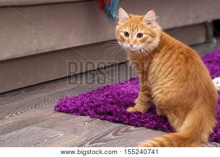 nice and fluffy little red kitten sitting on the bark