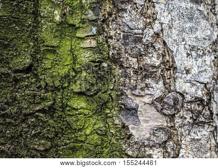 Wood texture closeup image Macro photo of grey and mossy tree surface. Natural background from forest for wooden banner template, shabby chick backdrop, eco product package. Timber close-up picture