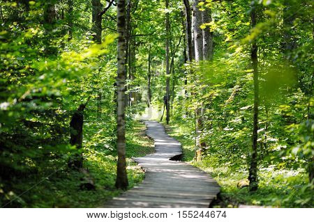 Wooden Pathway Leading To A Sunny Park