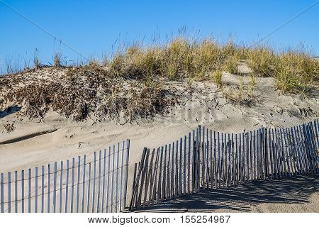 Beach grass on dunes with picket fence at Sandbridge Beach in Virginia Beach, Virginia.