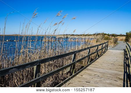 Raised walkway through marsh at Back Bay National Wildlife Refuge in Virginia Beach, Virginia.