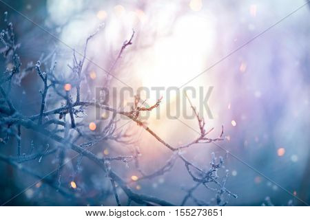 Winter nature background. Christmas holiday backdrop, Frozen tree branch closeup. Abstract Art design. Shallow DOF, soft focus