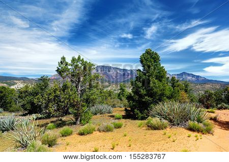 Dixie National Forest Near Yant Flat Sandstone Formations In Utah