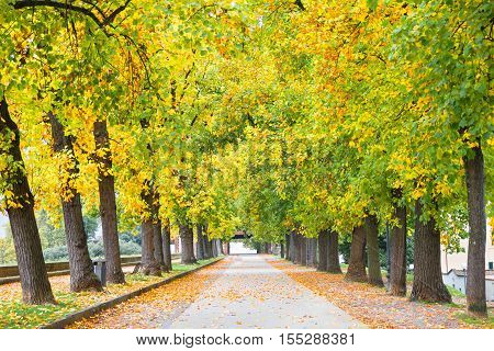 Walkway full of trees during the autumn in Lucca, Tuscany, Italy