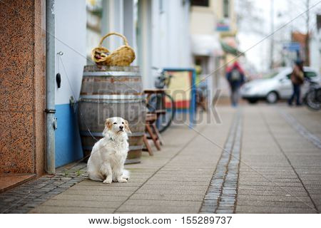 Dog On A Leash Tied To A Store Door Patiently Waiting For His Master