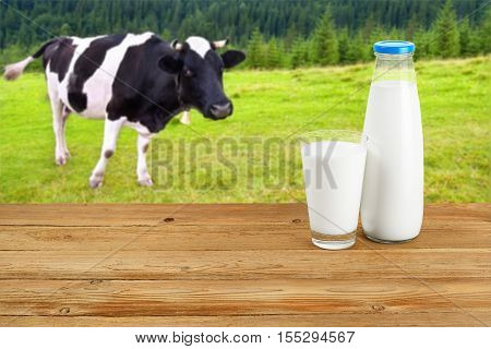 Milk in glass and in bottle on table with cow on the meadow in background. Bottle and glass of milk on wooden table with cow. Milk on the background of grazing cow. Milk on wooden table with cow on the background