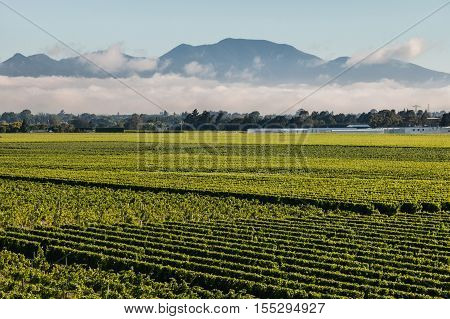 cloud inversion above vineyards in Marlborough, New Zealand