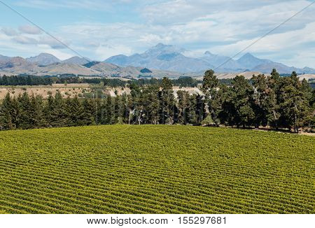 aerial view of vineyard in Marlborough region in New Zealand