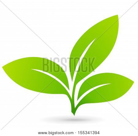 Illustration of green leaves on white background