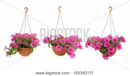 Pink Flowering