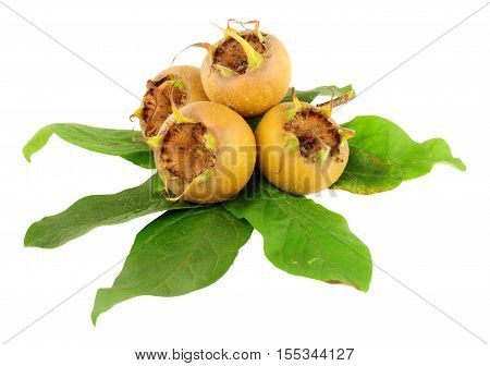 Group of common medlar fruit and leaves isolated on a white background