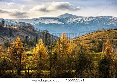 Snowy Peaks Over Autumn Forest