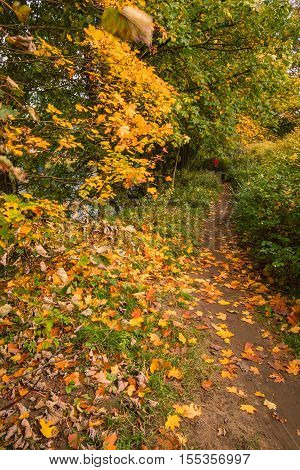 Autumn walk along the South Tyne, on a riverside trail through woodland at Warden in Northumberland