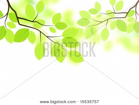 fresh green leaves background - vector.