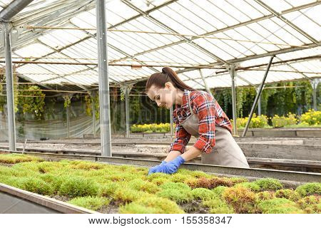 Pretty young gardener looking after decorative plants in greenhouse
