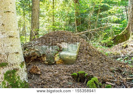 Enormous ant hill in the middle of the forest, in the province of Girona, Alp, Catalonia, Spain