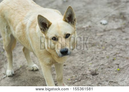 Portrait of cute street dog warning stranger about don't cross the line