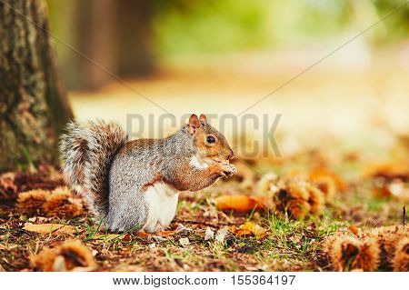 Cute Squirrel In Autumn Scene