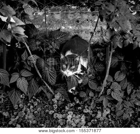 Cat hiding in his hideout and looking above.