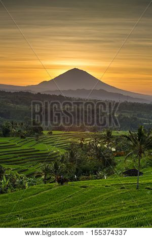 Jatiluwih Rice Terraces and Agung volcano at sunrise, Bali, Indonesia