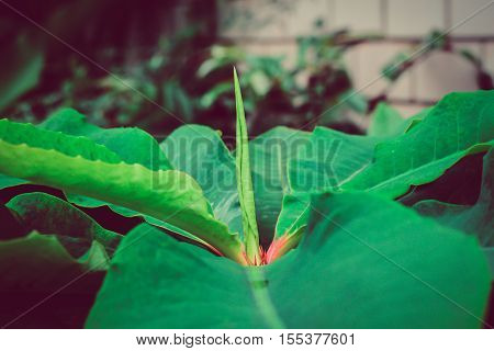 growing concept: the growth of new leaves sprout.