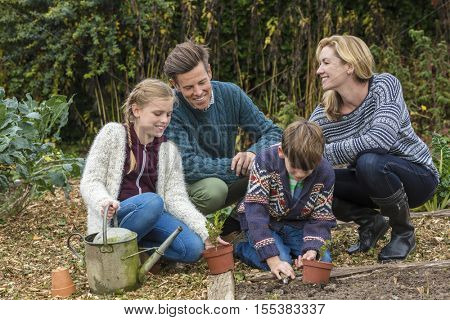 Attractive, successful and happy family, man, woman, girl and boy child, mother, father, son and daughter gardening together in a garden vegetable patch