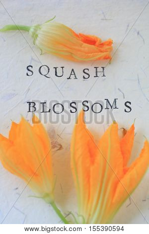 Three squash blossoms with words on textured paper