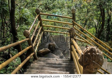 Monkeys sit on stair at tiger cave temple in Krabi, Thailand