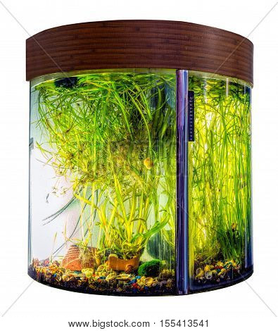 Beautiful sem icircular aquarium with tropical fish