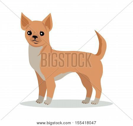 Chihuahua dog breed flat design vector. Purebred pet. Domestic friend and companion animal illustration. For pet shop ad, animalistic hobby concept, breeding illustration. Cute canine portrait
