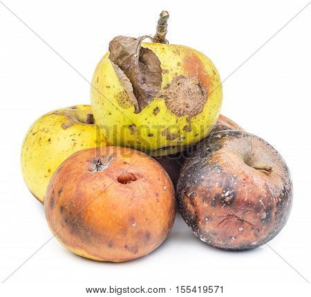 Rotten and moldy apples isolated on white background. Moldy vegetable.