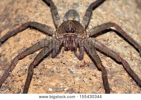 Spider Front Picture. Forest in West Papua Indonesia