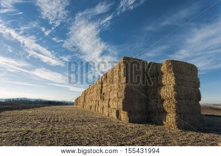 A large stack of hay bales in north Idaho near Worley.